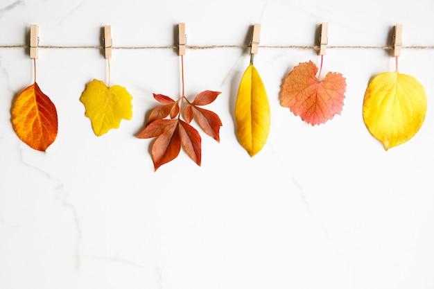 Widok z góry na jesienne liście - jabłoń, topola, piwonia, rododendron, dzikie winogrona na sznurku z spinaczami do bielizny na białym marmurowym tle. leżał na płasko