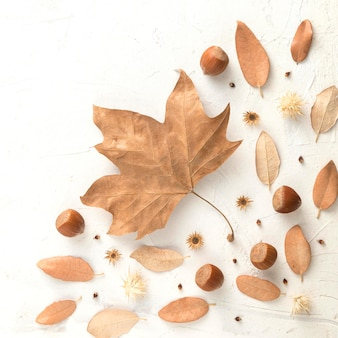 Widok z góry na jesienne liście z kasztanami i miejsce na kopię