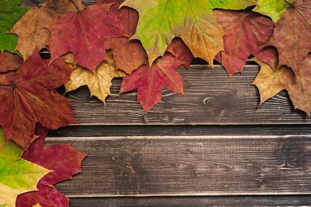 Widok z góry na jesienne liście z miejsca na kopię