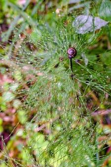 Widok z góry na krzew powietrzny z rosą i ślimakiem na czubku. skoncentruj się na ślimaku. piękne wspaniałe tło. na dole zamazane liście i trawa.