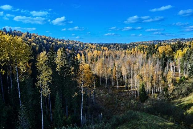 Widok z góry na las jesienią