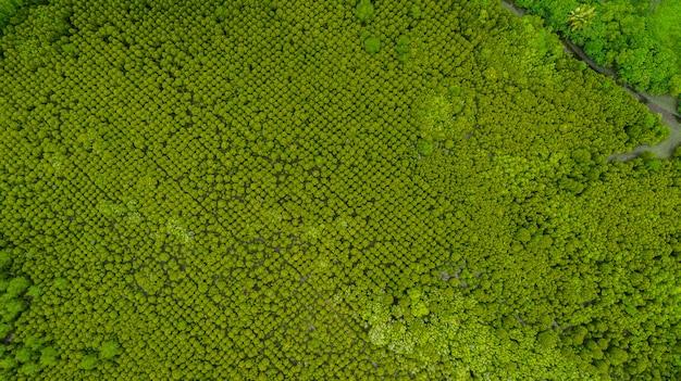 Widok z góry na lasy namorzynowe intung prong thong, golden mangrove field at pra sae, rayong,