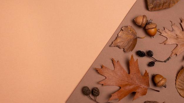 Widok z góry na monochromatyczny wybór liści