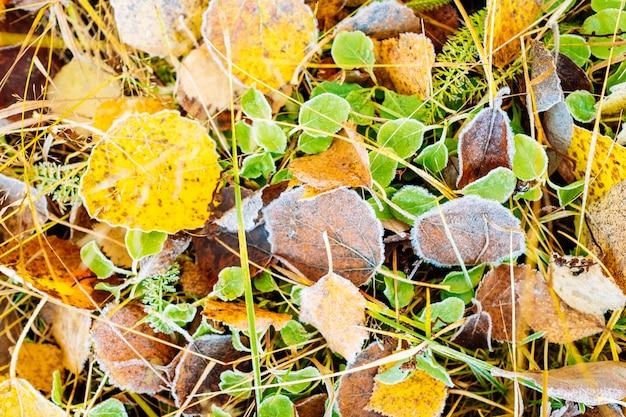 Widok z góry na mróz, obejmujące suche liście