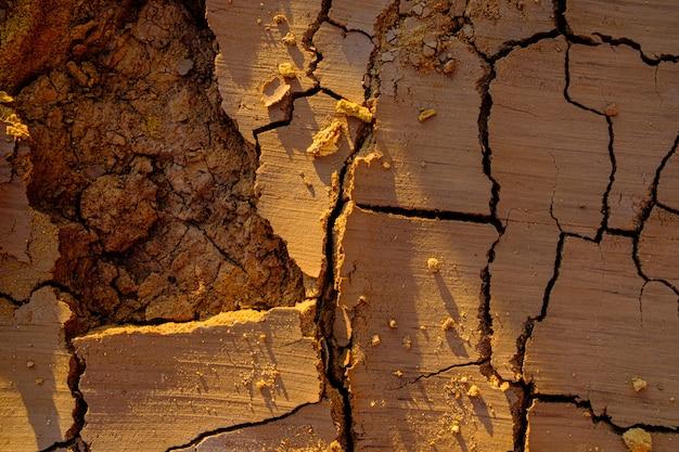 Widok z góry na naturalną mozaikę utworzoną przez pęknięcia w suchej gliniastej glebie