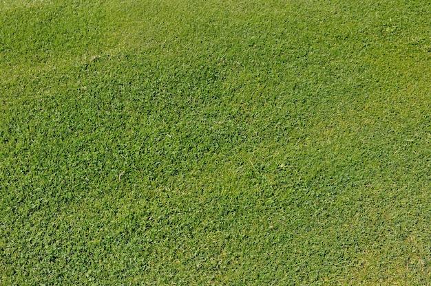 Widok z góry na ogoloną i zieloną trawę