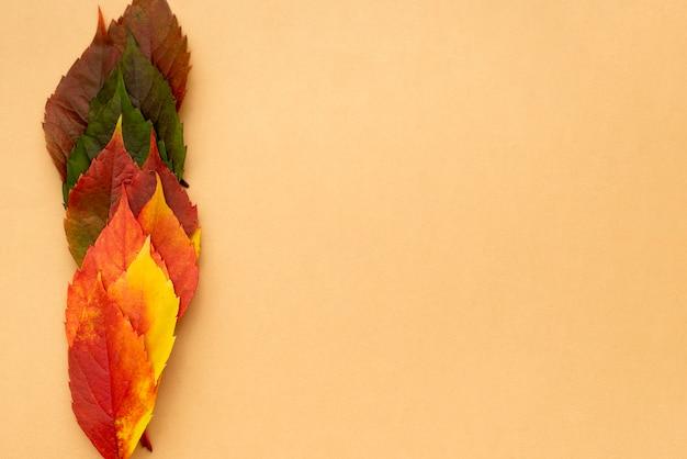 Widok z góry na pięknie kolorowe jesienne liście z miejsca na kopię