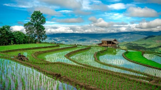 Widok z góry na pole ryżu ryżowego