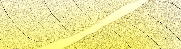 Widok z góry na przezroczyste liście