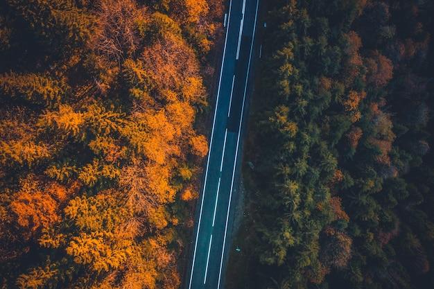 Widok z góry na pustą utwardzoną drogę biegnącą między jesiennymi drzewami