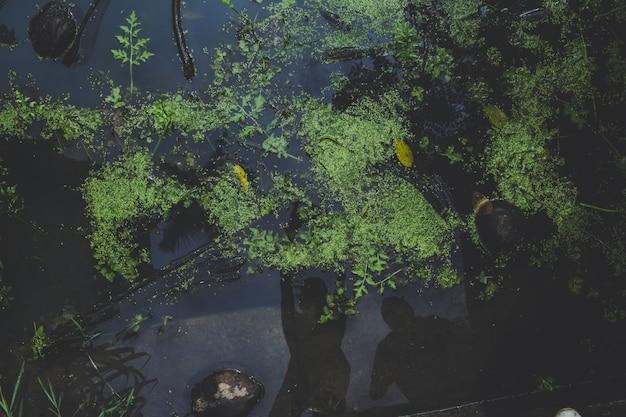 Widok z góry na rośliny wodne