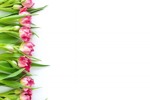 Widok z góry na różowe kwiaty tulipanów, które leżą płasko obok białego tła.