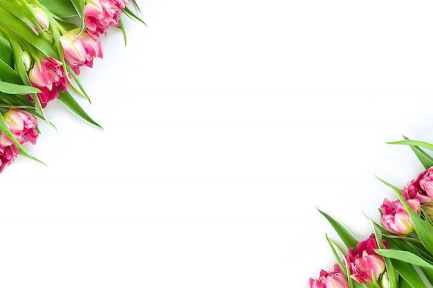 Widok z góry na różowe kwiaty tulipanów, które leżą po przekątnej na białym tle.