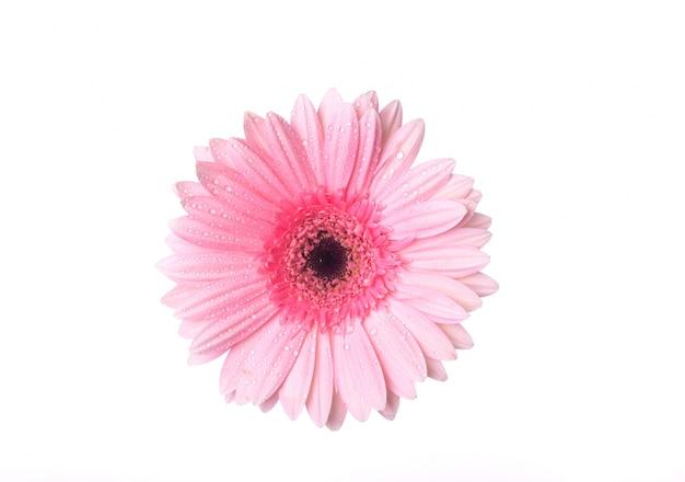Widok z góry na różowy kwiat z kropli