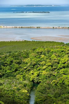 Widok z góry na rzekę i kajaki pływające wśród bujnej roślinności namorzynowej
