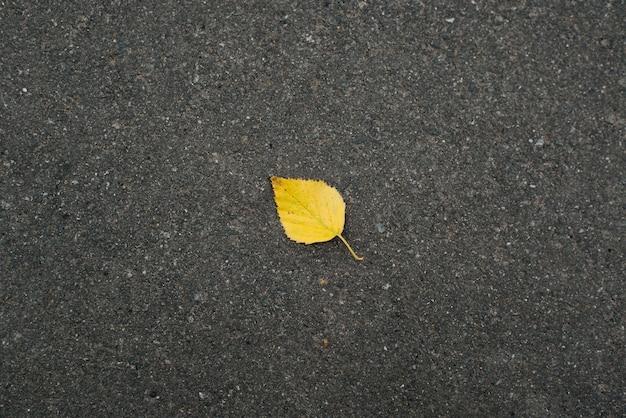 Widok z góry na samotny pojedynczy opadły żółty liść na ciemnym asfalcie. koncepcja jesień.