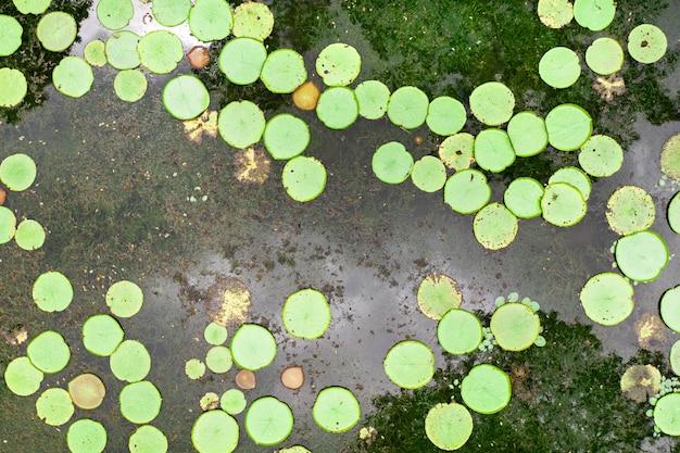 Widok z góry na staw z liliami na wyspie mauritius. ogród botaniczny na rajskiej wyspie mauritius.