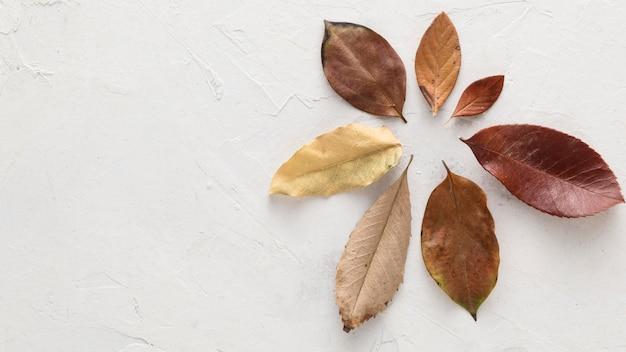 Widok z góry na suche jesienne liście z miejsca na kopię
