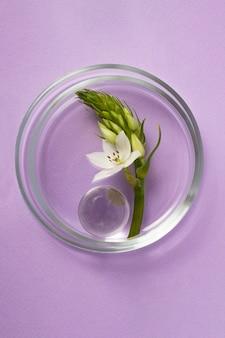 Widok z góry na szalki petriego z białym kwiatem i szklaną bombką wewnątrz. fotografia pionowa, fioletowe tło.