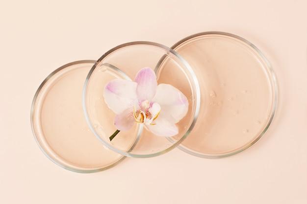 Widok z góry na szalki petriego z przezroczystym żelem w środku. w nim świeża orchidea. koncepcja badań i przygotowanie kosmetyku. pastelowe beżowe tło.