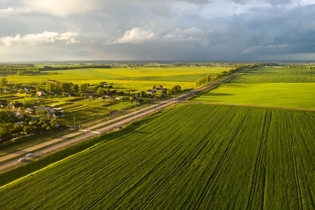 Widok z góry na zasianą zieleń w belarus.agriculture in belarus.texture.