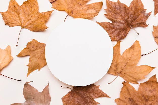 Widok z góry na zbiór jesiennych liści z papierowym kółkiem