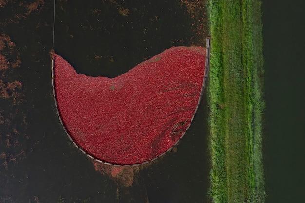 Widok z góry na zbiory żurawiny w gospodarstwie