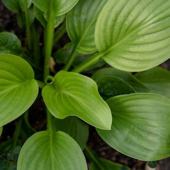 Widok z góry na zewnątrz zielonych roślin