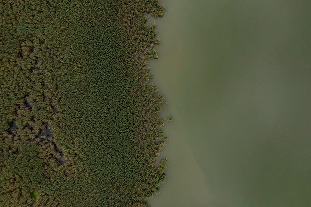 Widok z góry na zieloną wodę i florę jeziora. streszczenie tekstura
