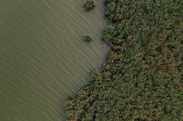Widok z góry na zieloną wodę i florę jeziora.