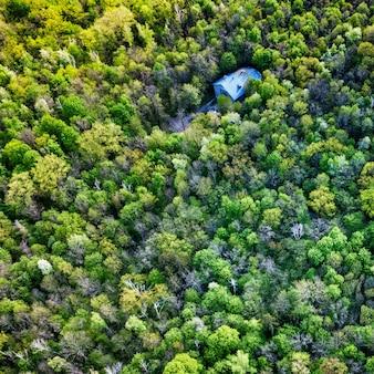 Widok z góry na zielony wiosenny las.