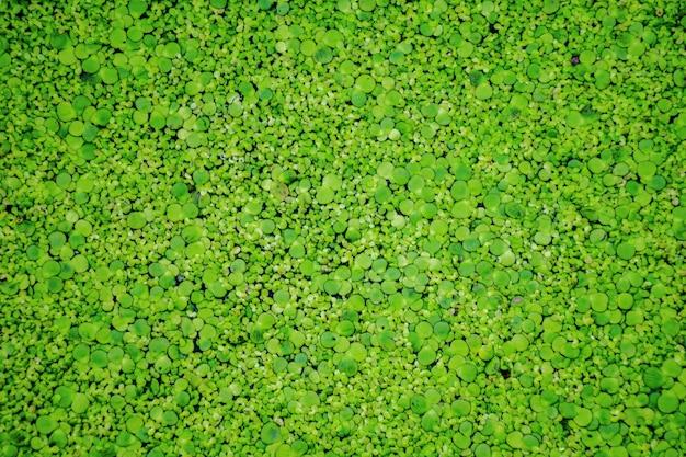 Widok z góry na zielonym krzaku