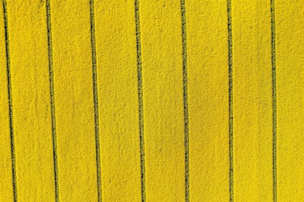 Widok z góry na żółte pole rzepaku, z góry kwitnące kwiaty rzepaku