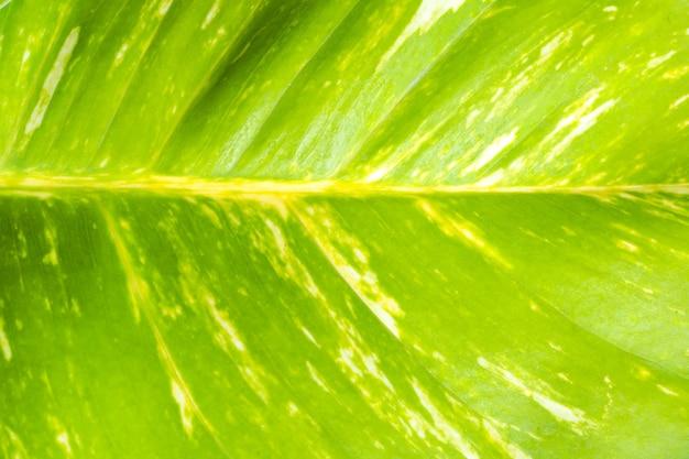 Widok z góry natury zielonych liści na tle