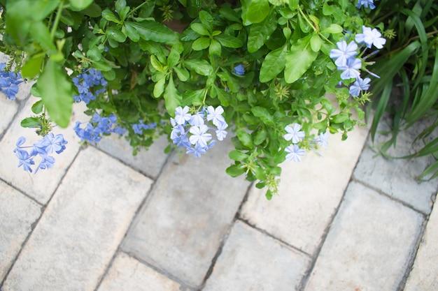 Widok z góry, ogród kwiatowy, na chodniku,