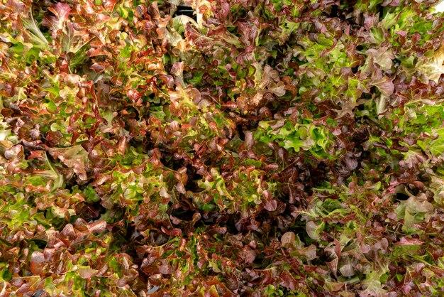 Widok z góry organiczny ogród warzywny na tle