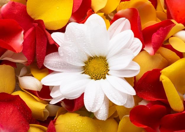 Widok z góry pięknych kwiatów w różnych kolorach