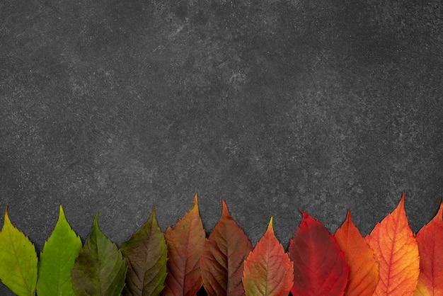 Widok z góry pięknych liści jesienią z miejsca na kopię