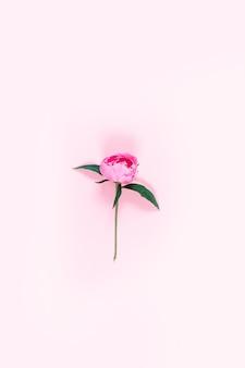 Widok z góry, płaski, minimalistyczny styl. zdjęcie pionowe. różowa piwonia kwiat na różowym tle,