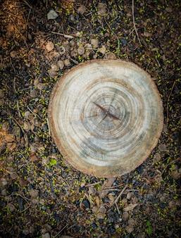 Widok z góry pnia drzewa