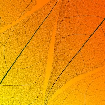 Widok z góry półprzezroczystej tekstury liścia