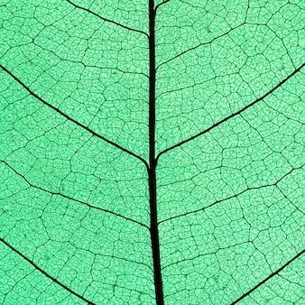 Widok z góry przezroczystego liścia w kolorze odcień