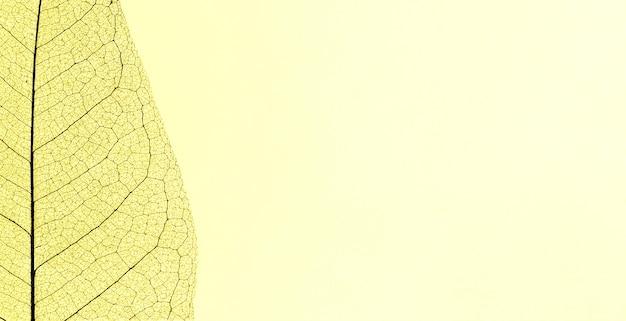 Widok z góry przezroczystego liścia z miejsca na kopię