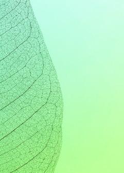 Widok z góry przezroczystej tekstury liścia z miejscem na kopię