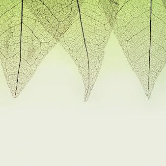 Widok z góry przezroczystych liści z kolorowym odcieniem