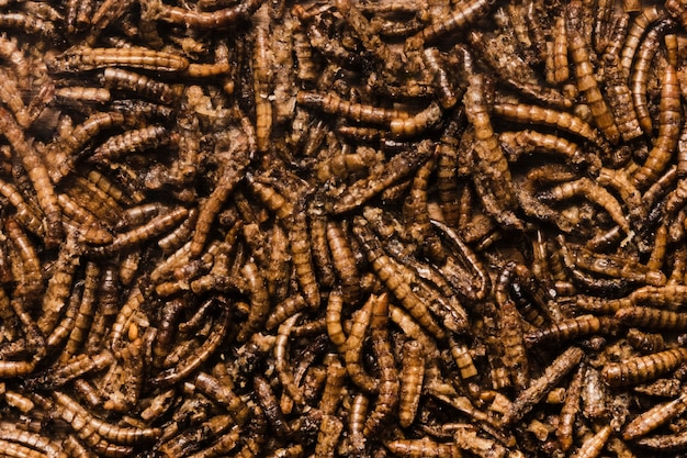 Widok z góry pyszne smażone robaki