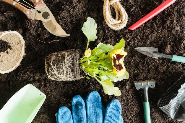 Widok z góry rośliny bratek otoczonej narzędziami ogrodniczymi na glebie do sadzenia