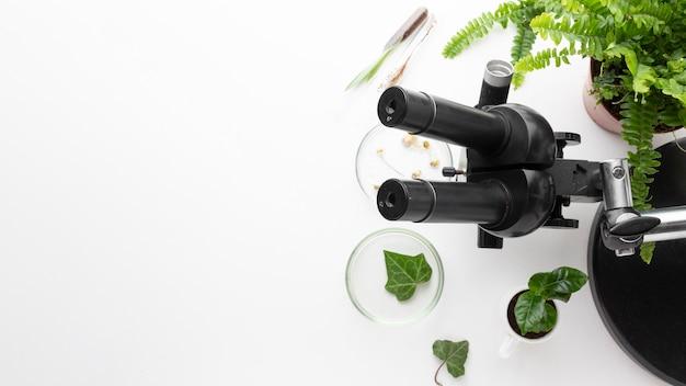 Widok z góry rośliny i rama mikroskopu