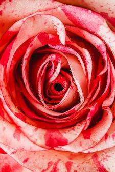 Widok z góry różany szczegół tło