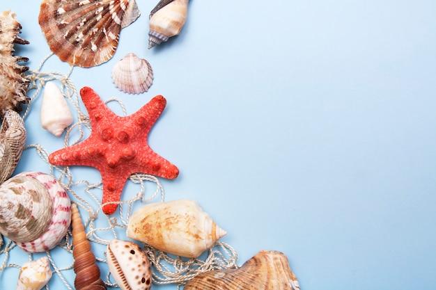 Widok z góry rozgwiazdy, muszle na sieci rybackiej